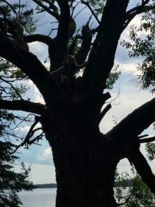 a girl is in a big tree over the water. The light is such that you can hardly see her as she blends into the dark trunk